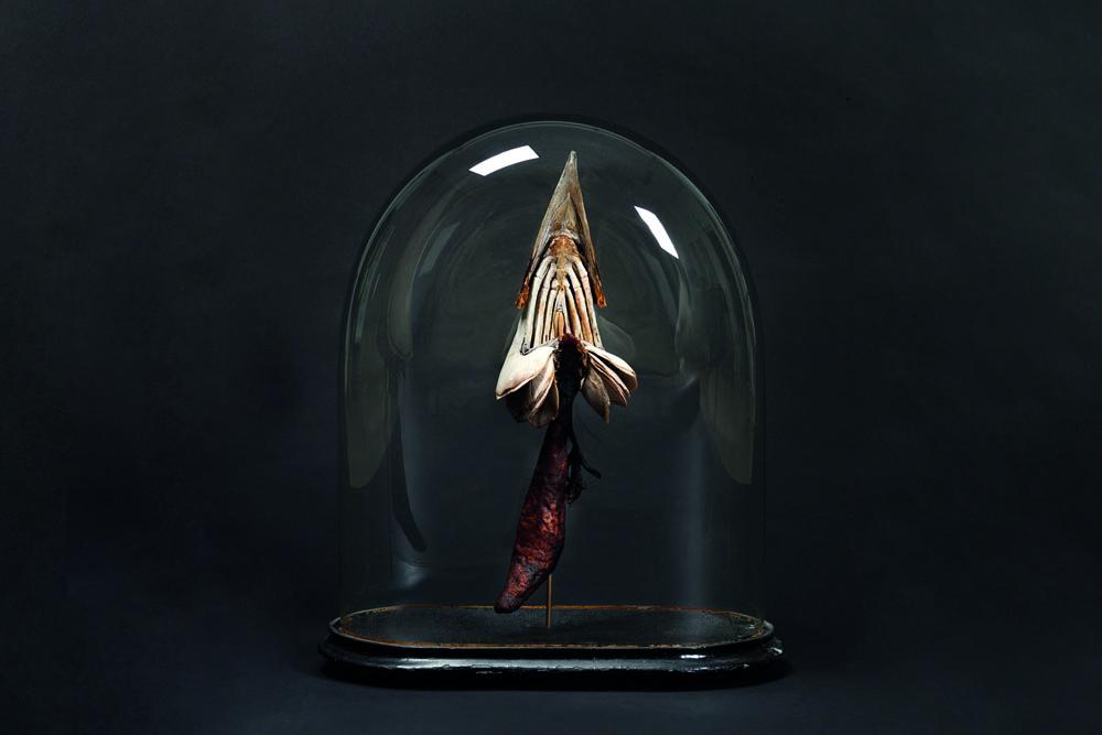 Swordfish-digestion-system-Mandy-den-Elzen
