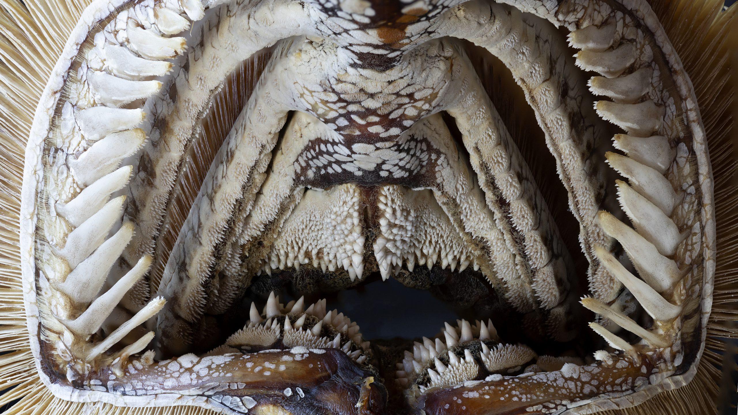 Classification of teeth - Mandy den Elzen